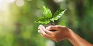 Nuove piante per affrontare il cambiamento climatico - 30.12.2020